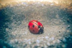 Ladybug on street Stock Images