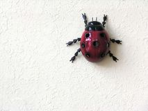 Ladybug su priorità bassa bianca Immagini Stock