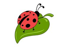 Ladybug su un foglio Immagini Stock
