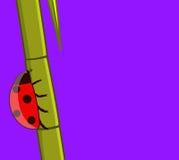 Ladybug on Sugarcane Vector Royalty Free Stock Photos