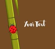 Ladybug on Sugarcane Royalty Free Stock Images
