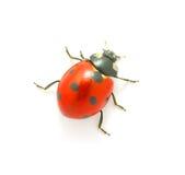 Ladybug sul bianco Fotografia Stock