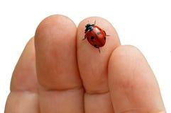Ladybug sulla mano Fotografia Stock