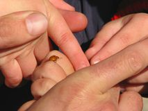 Ladybug sulle barrette Fotografie Stock