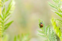 Ladybug. Summer day. ladybug on grass Stock Photography