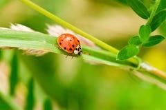 Ladybug summer Stock Images