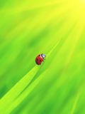 Ladybug with sun. Ladybug creeps to sun on slip Stock Image