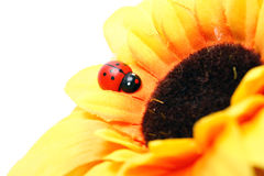 Ladybug on sunflower Stock Photo