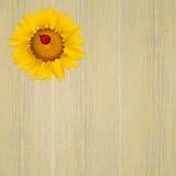 Ladybug on sunflower Royalty Free Stock Photography
