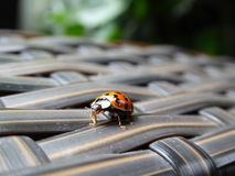 Ladybug on Terrace Chaise. This cute little ladybug with many spots was photographed on my terrace chaise royalty free stock image