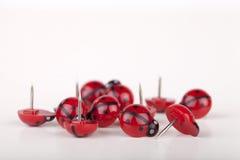 Ladybug thumbtacks Stock Images