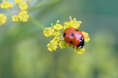 Ladybug on top Stock Images
