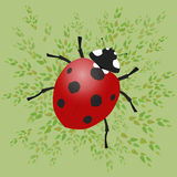 Ladybug. A ladybug vector illustration with green leafs on a green background Stock Photos