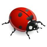 Ladybug vector illustration isolated on white background.  Royalty Free Stock Image
