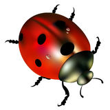 Ladybug vector red illustration colored beetle Stock Images