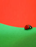 Ladybug Walking. Close-up of a ladybug walking on a green carton and red background Stock Images