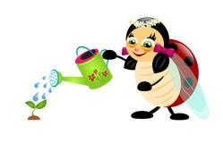 Ladybug watering plant Stock Photography