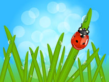Ladybug on wet grass. Beautiful macro landscape with cute ladybug on grass blade with drops of water or morning dew with sky background and bokeh Royalty Free Stock Image