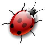 Ladybug. On white eps10 Royalty Free Stock Photos