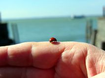 Ladybug on a woman hand in front of the lake Royalty Free Stock Photos