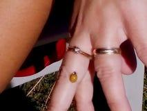 Ladybug. On woman& x27;s finger Royalty Free Stock Images