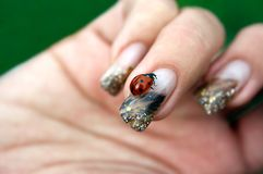 Ladybug on a woman's nail. Ladybug standing on a decorated woman's fingernail Stock Photos