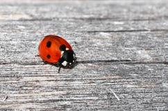 Ladybug on wood Royalty Free Stock Photo