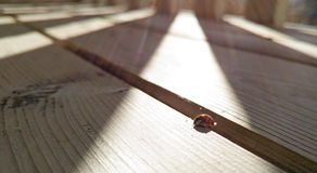 Ladybug on wooden surface Stock Photos