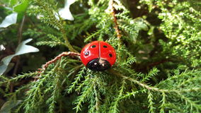 Ladybug in the woods Royalty Free Stock Photography