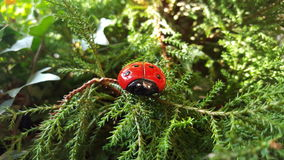 Ladybug in the woods stock images