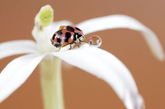 Ladybug y burbuja Fotos de archivo libres de regalías