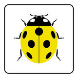 Ladybug yellow realistic cartoon icon Royalty Free Stock Photography