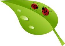 Ladybugs στο φύλλο Στοκ εικόνα με δικαίωμα ελεύθερης χρήσης