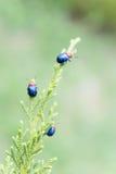 Ladybugs внутри outdoors, насекомое на дереве Стоковые Фотографии RF
