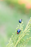 Ladybugs в ourdoor, насекомом на дереве Стоковые Фотографии RF