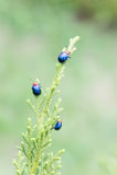 Ladybugs в ourdoors, насекомом на дереве Стоковое Изображение