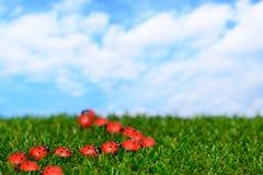 Ladybugs на зеленом поле Стоковые Изображения RF