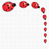 Ladybugs на поставленной точки предпосылке Стоковая Фотография RF