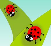 Ladybugs. Two cute ladybugs on green leafs Royalty Free Stock Images