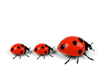 Ladybugs Royalty Free Stock Images