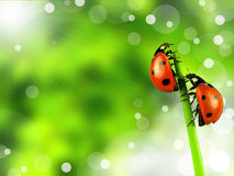 Ladybugs Fotografía de archivo libre de regalías