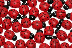 Ladybugs Fotos de Stock