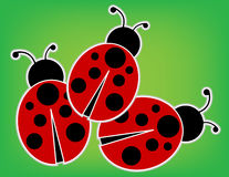 Ladybugs. Outlined and set on a green abstract grass background Stock Photos