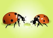 ladybugs Στοκ εικόνα με δικαίωμα ελεύθερης χρήσης