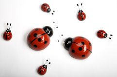 Ladybugs Stock Photos