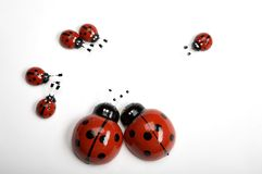 Ladybugs. Artificial ladybirds on white background Stock Image