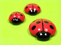 Ladybugs Fotos de Stock Royalty Free