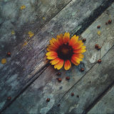 ladybugs Fotografie Stock Libere da Diritti