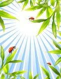 Ladybugs Royalty Free Stock Photos