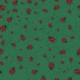 ladybugs Στοκ φωτογραφίες με δικαίωμα ελεύθερης χρήσης